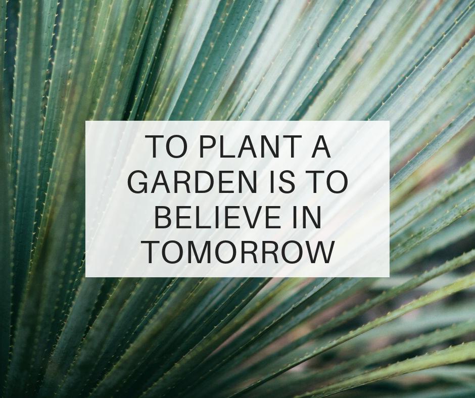 Blog; garden