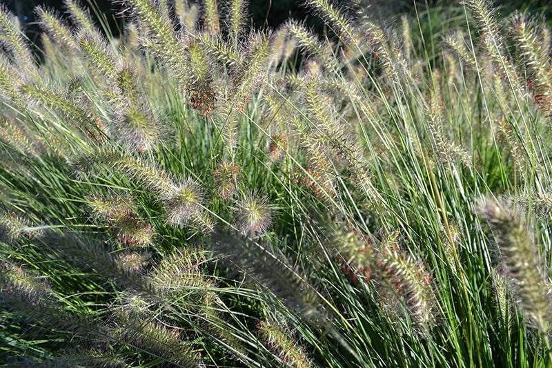 Beplanting tuin - LIV design