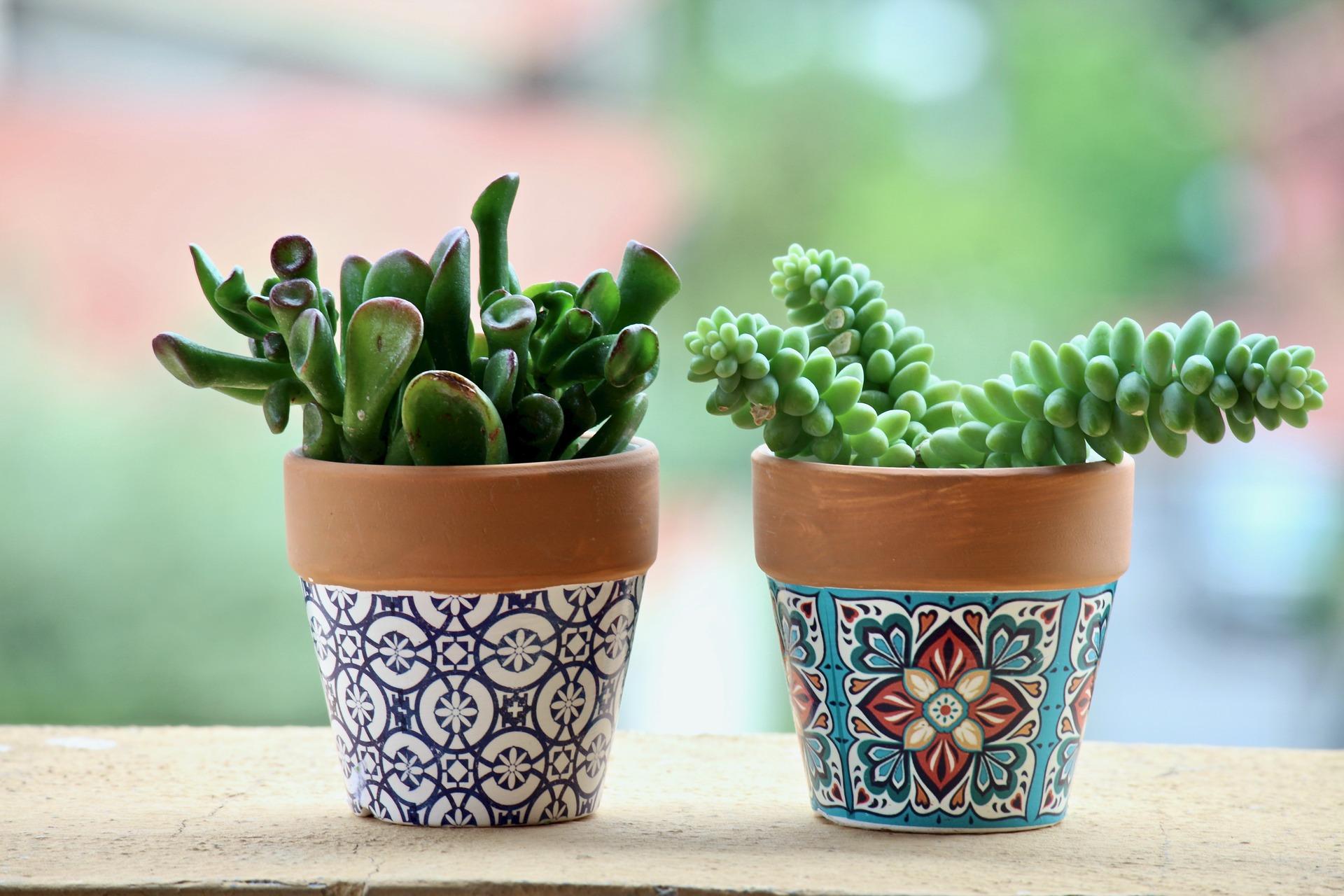 LIV green - cactus